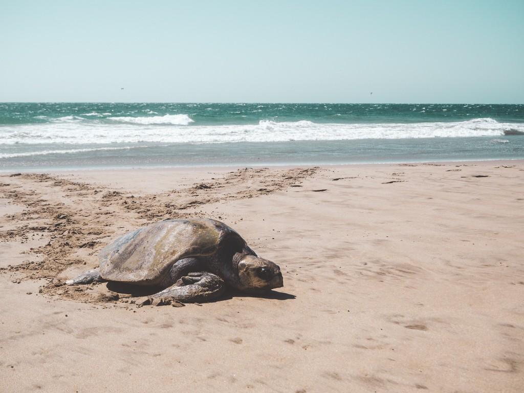 Mancora, Schildkröten und die Wale 4