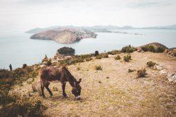 An der Copacabana und am Titikaka See