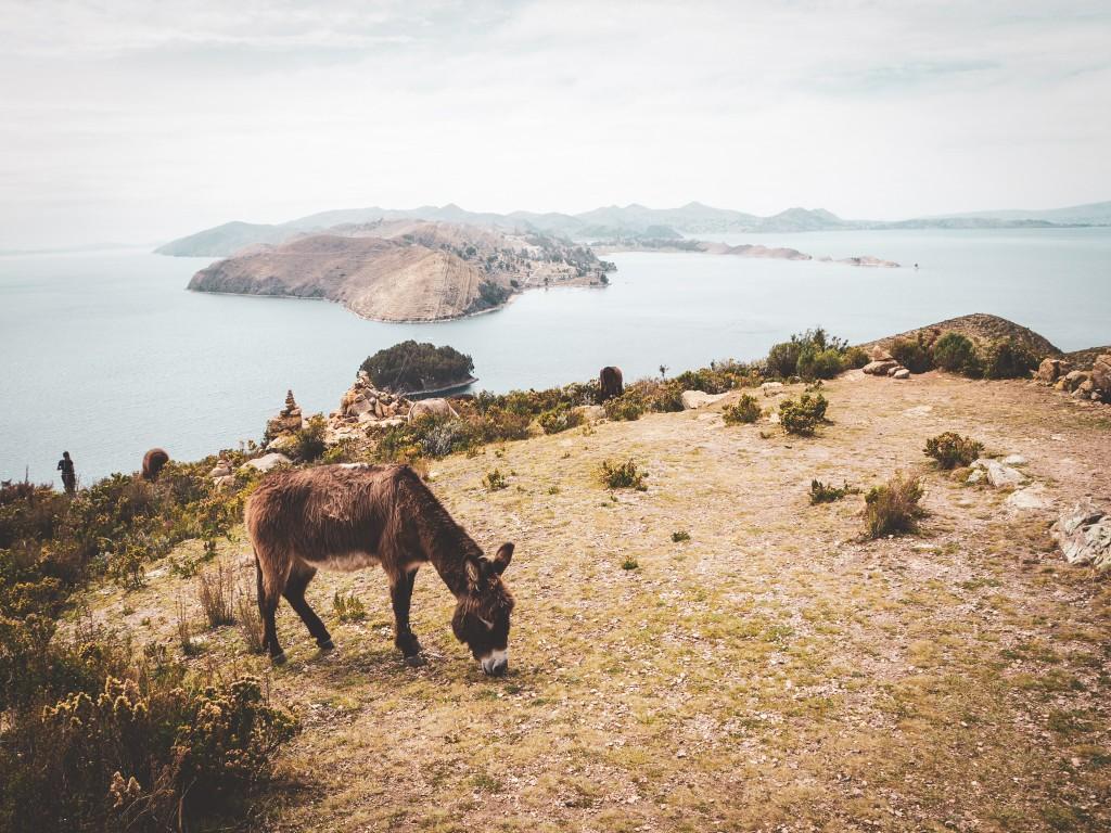 An der Copacabana und am Titikaka See 2